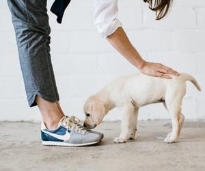 dog, nike, and puppy image