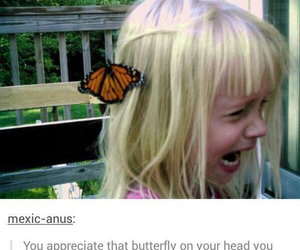 funny, tumblr, and butterfly image