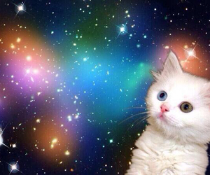 animal, galaxy, and cute image