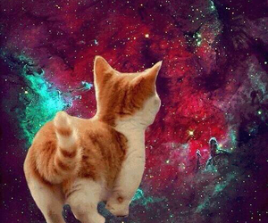 animal, galaxy, and cat image