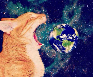 cat, galaxy, and earth image