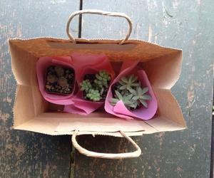 plants, bag, and nature image