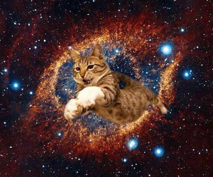 animal, cat, and galaxy image