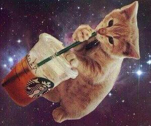 starbucks, galaxy, and cat image