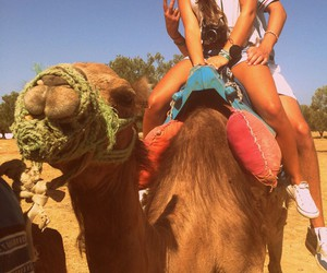 camels and holidays image