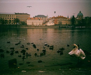 photography, vintage, and bird image