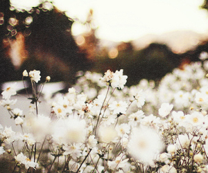flowers, header, and nature image