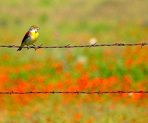Barbed Wire, bird, and birds image