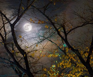 moon, night, and autumn image