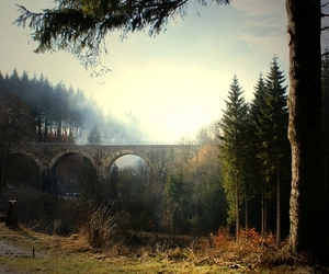 bridge, trees, and forest image