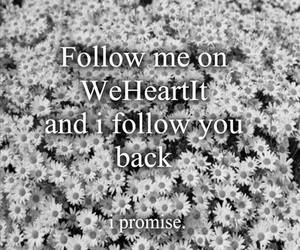 follow me, flowers, and follow image