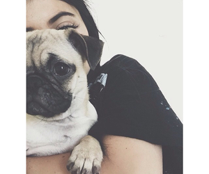 dog, kylie jenner, and pug image