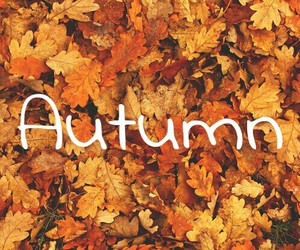 autumn, cold, and fave image