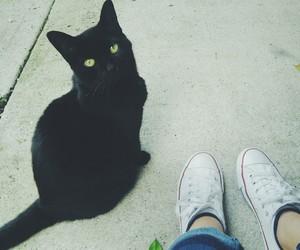 black cat, green eyes, and tumblr image