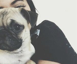 dog, pug, and kylie jenner image