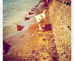 dog, seaside, and summer image