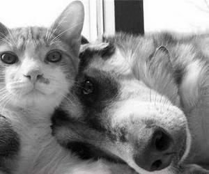 animals :3 image