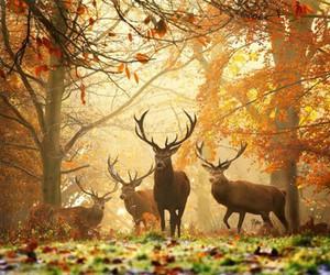 deer, autumn, and animal image