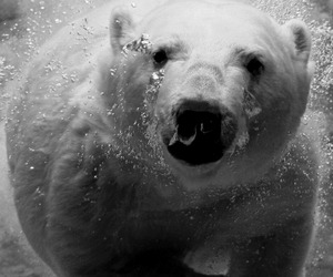 animals, bear, and black and white image