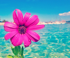summer, beautiful, and flowers image