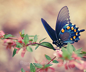 butterfly, flowers, and blue image