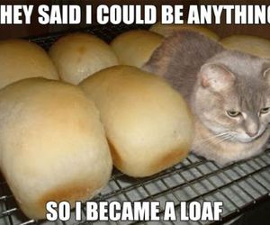 anything, bread, and cat image
