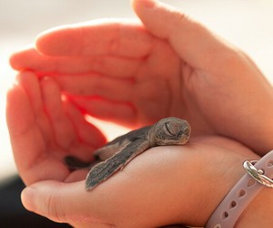 lovely, turtle, and nature image
