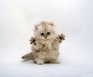 cats, kitten, and kitty image