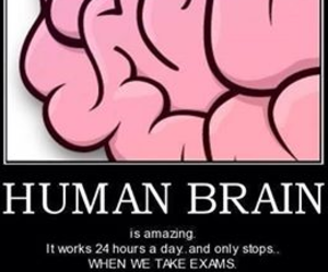 brain, i hate, and true image