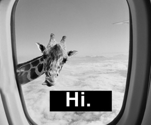 giraffe, hi, and funny image