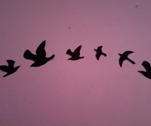 birds, Flying, and love image