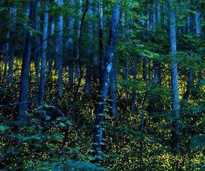 dark, forest, and magic image