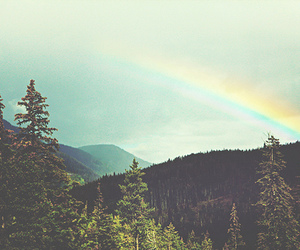 rainbow, nature, and forest image