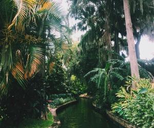 nature, amazing, and photography image