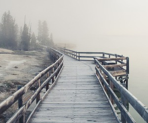 pine, plank, and fog image