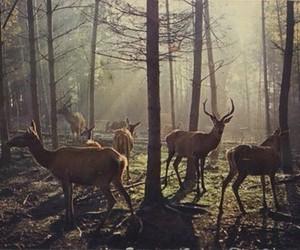 animal, bambi, and cute image