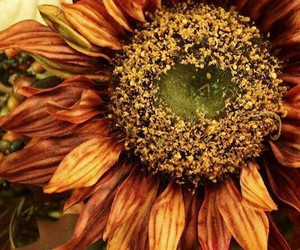 autumn, flowers, and sunflower image