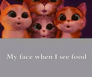 food, cat, and face image