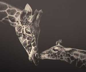 animal, photography, and inspiration image