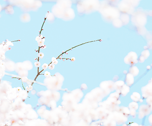 flowers, blossom, and blue image