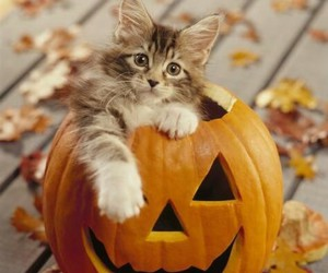 cat, hallowen, and cute image