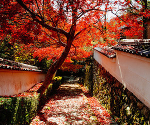 autumn, japan, and kyoto image
