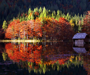 autumn, cabin, and trees image