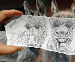 funny, donkey, and animal image