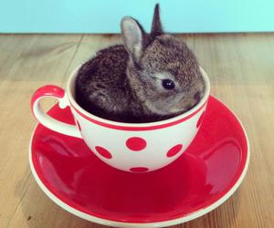 cute, bunny, and cup image