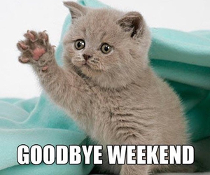 cat and weekend image