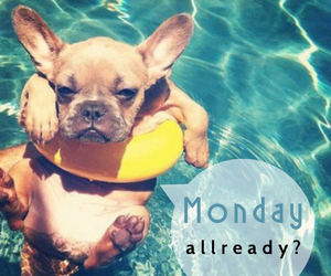 dog, monday, and over image