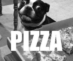 pizza, dog, and food image
