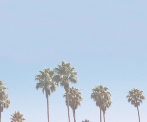 header, palm trees, and blue image
