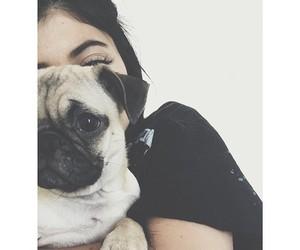 dog, kylie jenner, and pug image